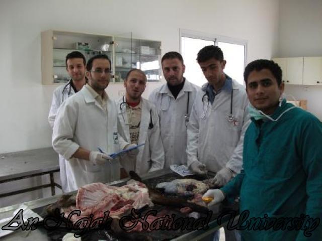 الطب البيطري (3)